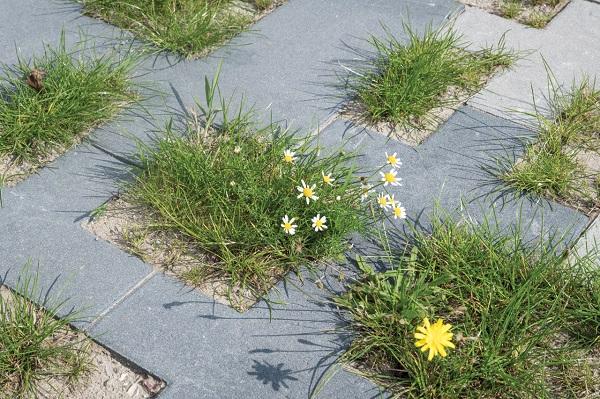De openingen van Square grasbestrating zijn voldoende groot om het gras uitbundig te laten groeien.