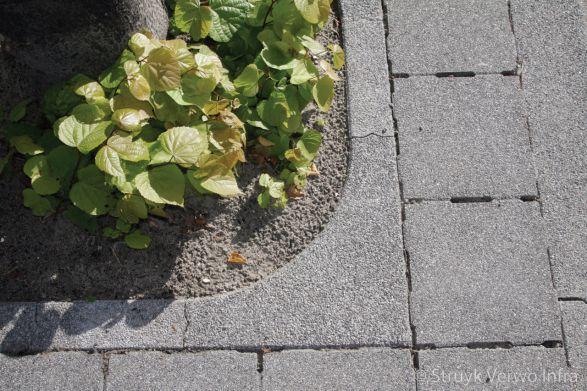 Boomkransen lavaro grijs 712 gesloten|boombescherming|Lavaro grijs 012