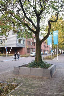 Betonnen bloembakbanden om een boom|boombescherming