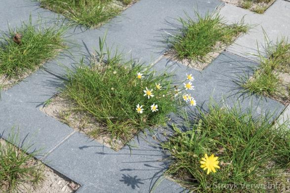 Groen op straat|groenbestrating|het Vrije Veld Almere