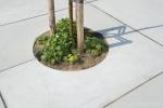 Boomspiegel boomkrans|betonnen boomspiegel
