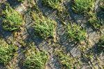 Grasbetontegel herinrichting montreallaan