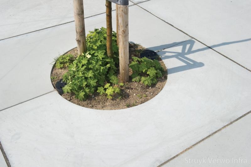 Boomspiegel boomkrans betonnen boomspiegel