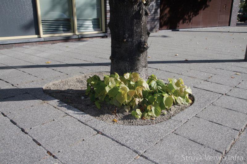 Boomkransen beton uitgewassen