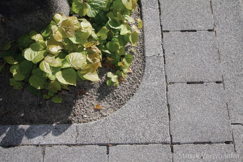 Boomkransen lavaro grijs 712 gesloten boombescherming lavaro grijs 012