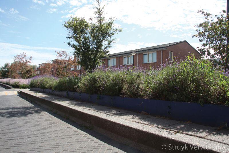 Verhoogd plantsoen met betonbanden in woonwijk
