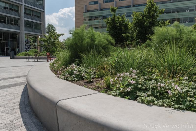 Zitranden met groen op secoya campus papendorp